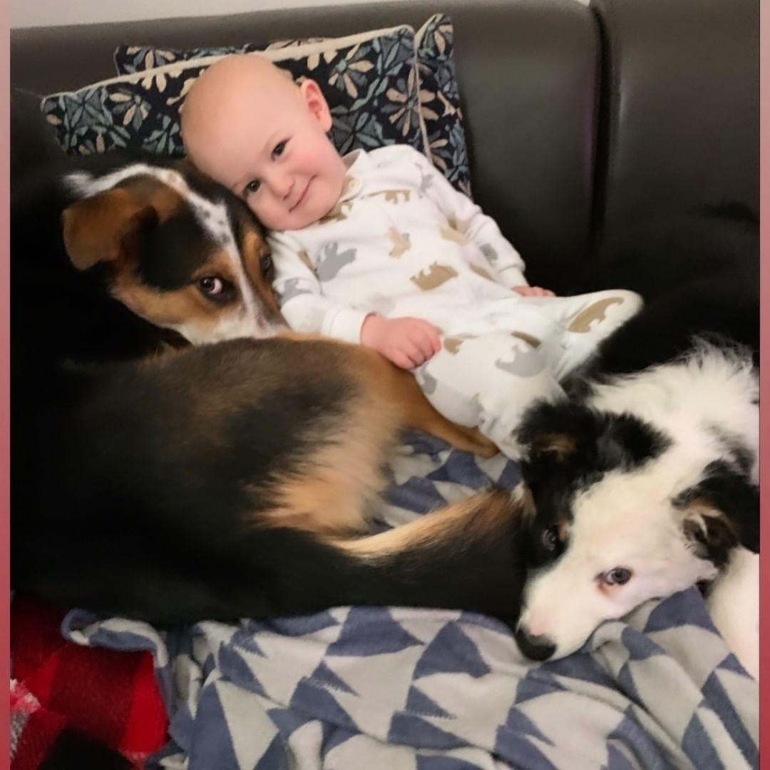 #puppiesofinstagram #dogsofinstagram #puppy #dogs #puppies #dog #puppylove