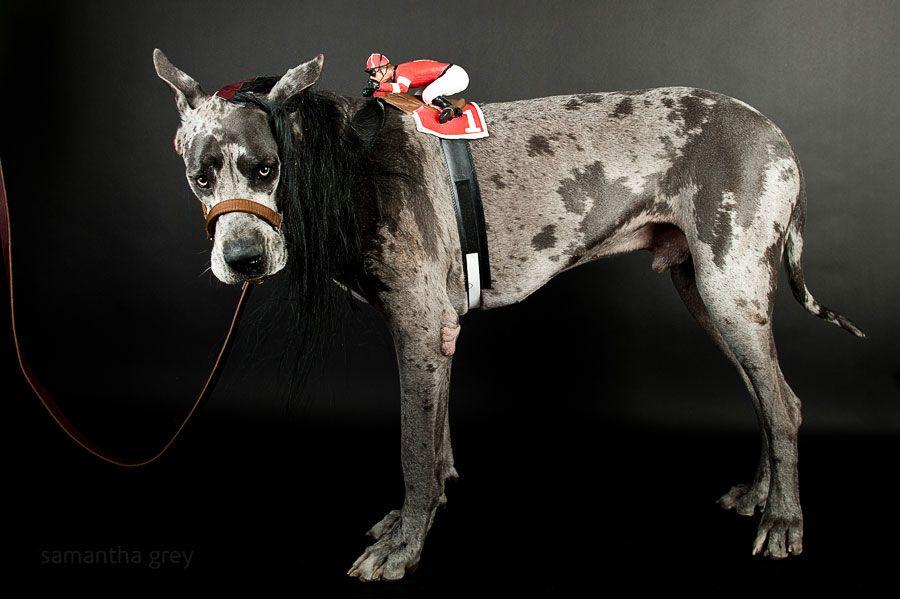 Pin By Sarah Caminiti On Great Dane Love Great Dane Costume