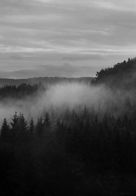 Misty forest. I love the way forests look clouded in mist and fog