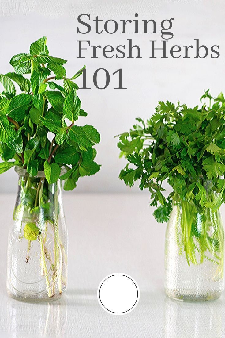 How to store coriander cilantro and keep it fresh longer