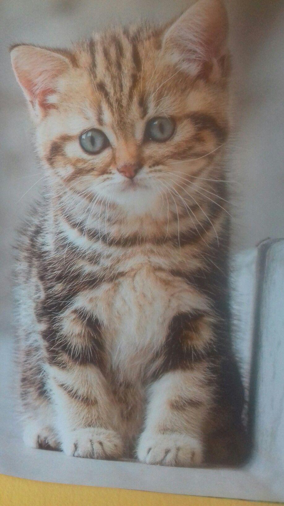 Susses Katzenbild Katzen Katzen Bilder Katzenbilder