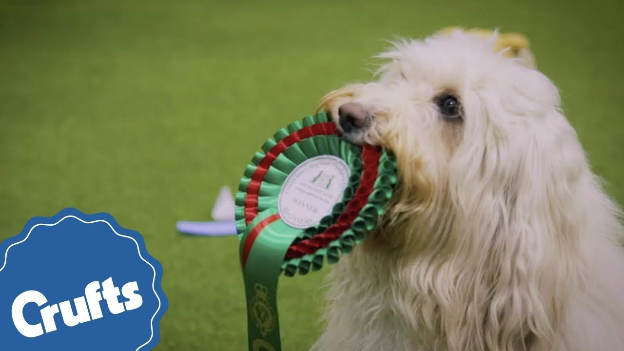 Crufts2019 Necbirmingham Cruftsbestinshow Agility Scruffts Supervet Thekennelclubuk Friendsforlife Eukanuba Dog Show The Kennel Club Animal Nutrition