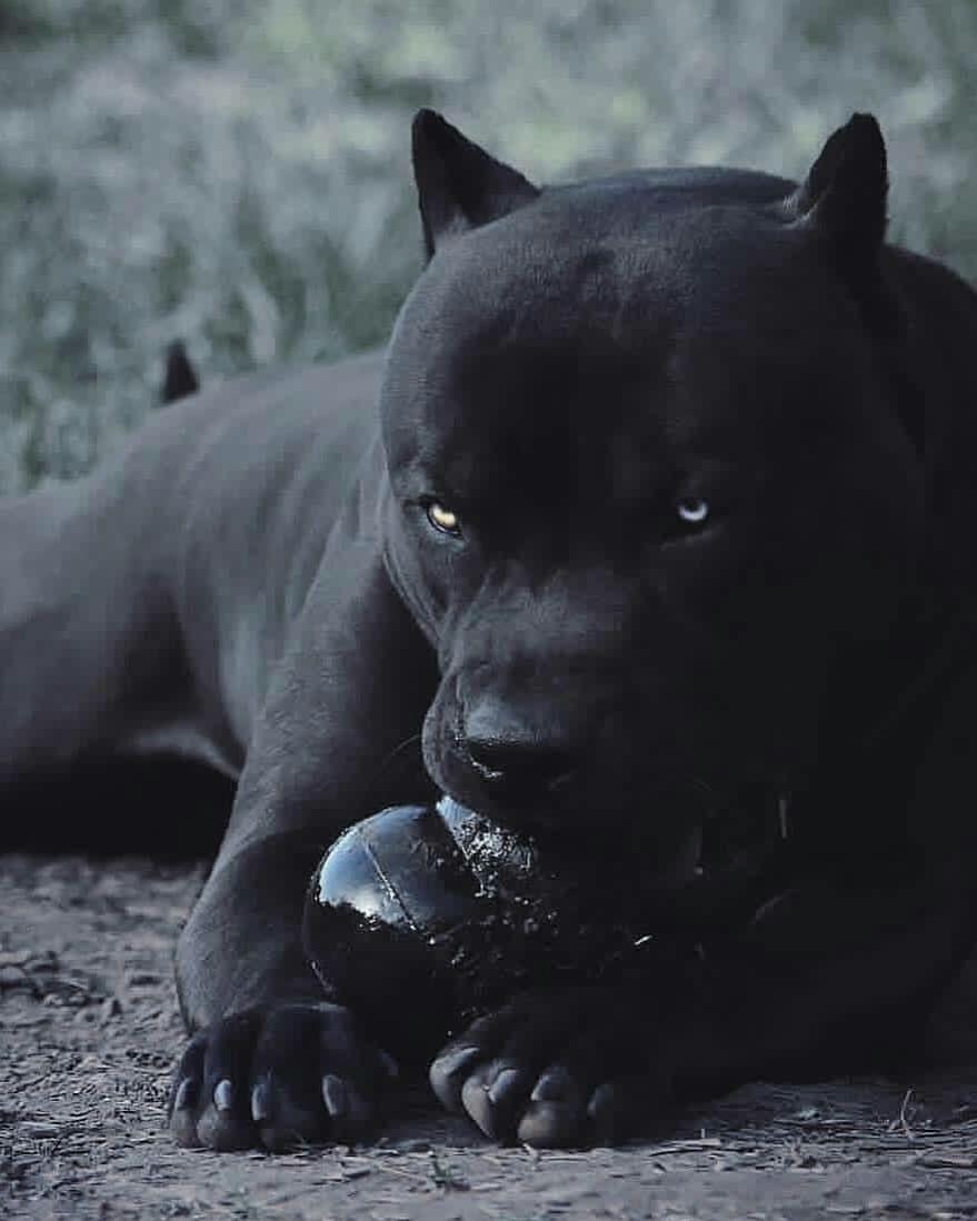 Behind The Scenes By Worldofartists In 2020 Susse Hunde Welpen Tiere Hund Welpen