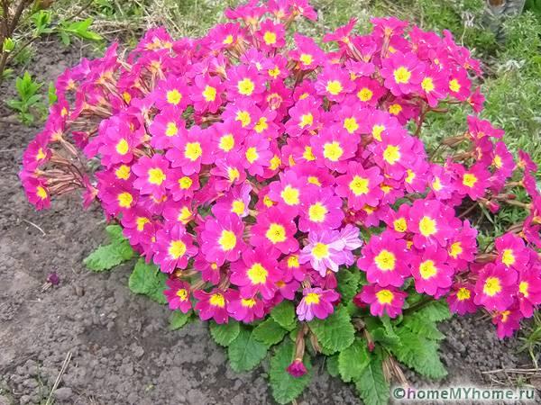 Многолетние цветы для дачи: фото, названия и описания ...