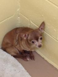 Adopt Mason On Purebred Dogs Animal Rescue Post Animal