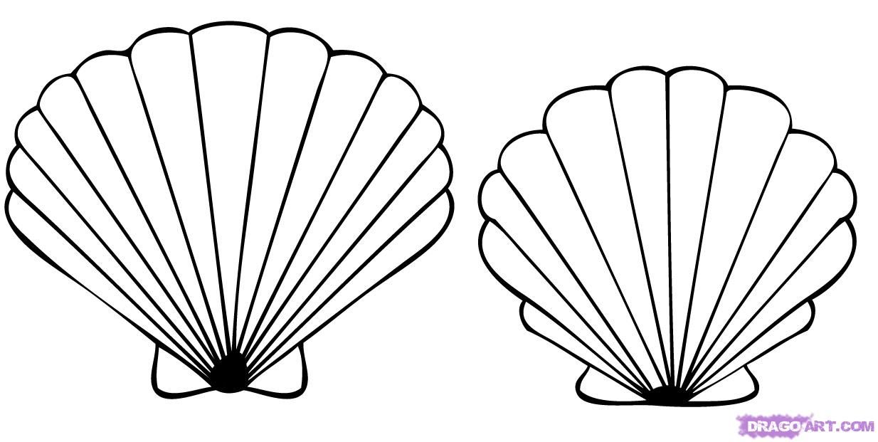 Sea shells coloring pages how to draw a seashell for Coloring pages of seashells