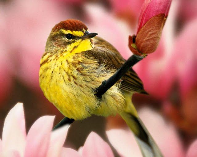 Beaux Oiseaux D Ecran Hd Fonds D Ecran Et Des Images Pour