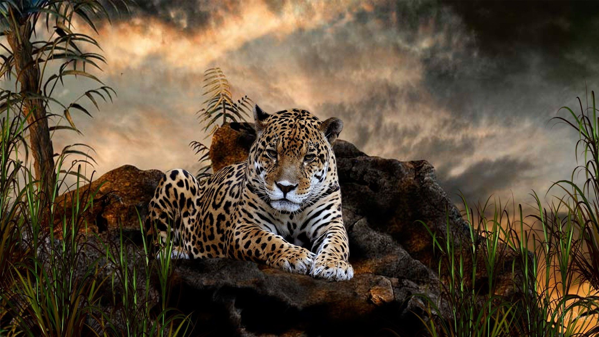 ... Jaguar Animal Wallpaper