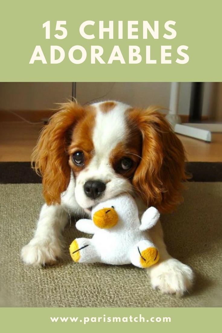 15 chiens adorables repérés sur Pinterest Chien, Animaux