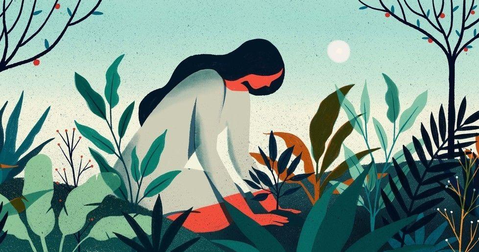 Illustration About Regeneration And Rebirth Nature Illustration Plant Illustration Tree Illustration