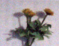 Miniatyrer skala 1:12 till ditt tittskåp eller dockskåp dandelion weed flower kit