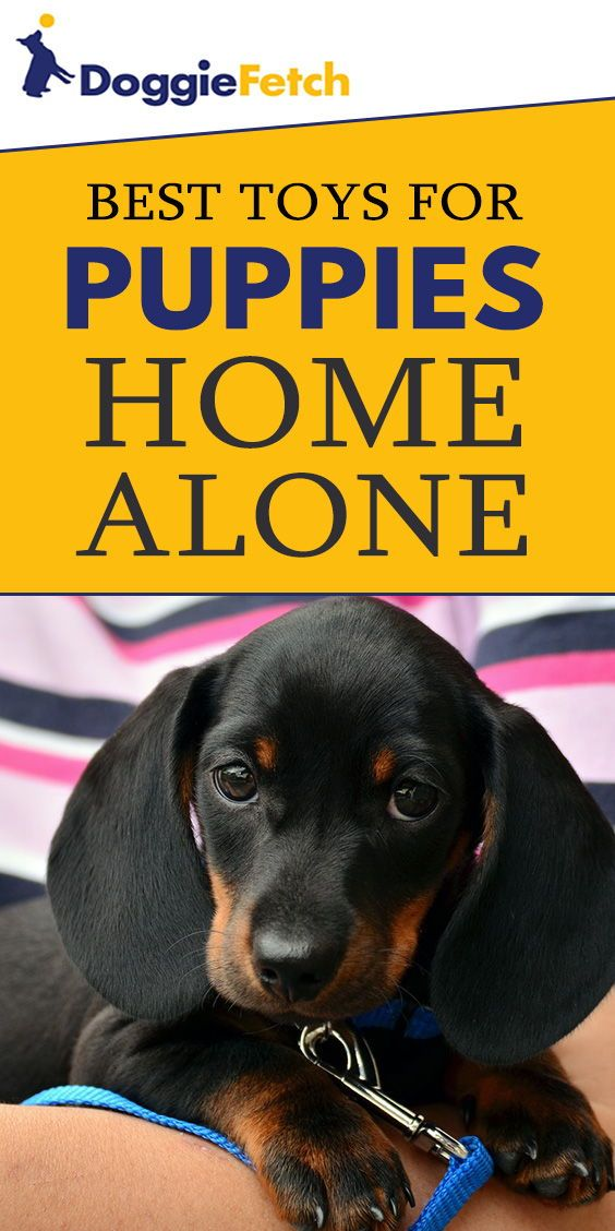Puppies need #toys, especially when they are left #homealone. Check out this list of the #best toys!