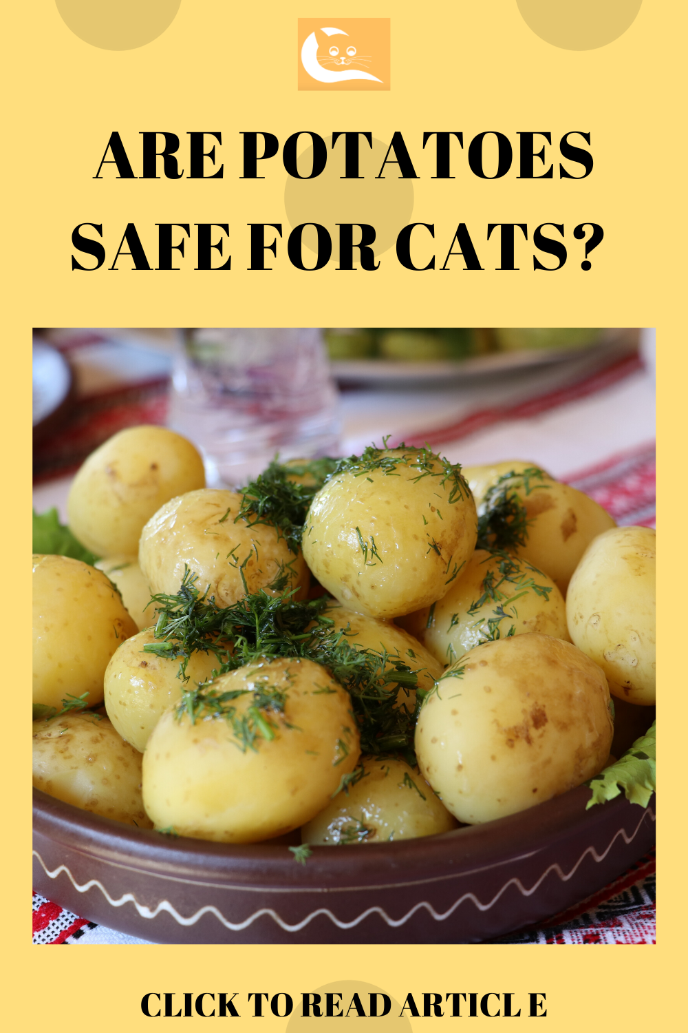 Can Cats Eat Potatoes (With images) Can cats eat