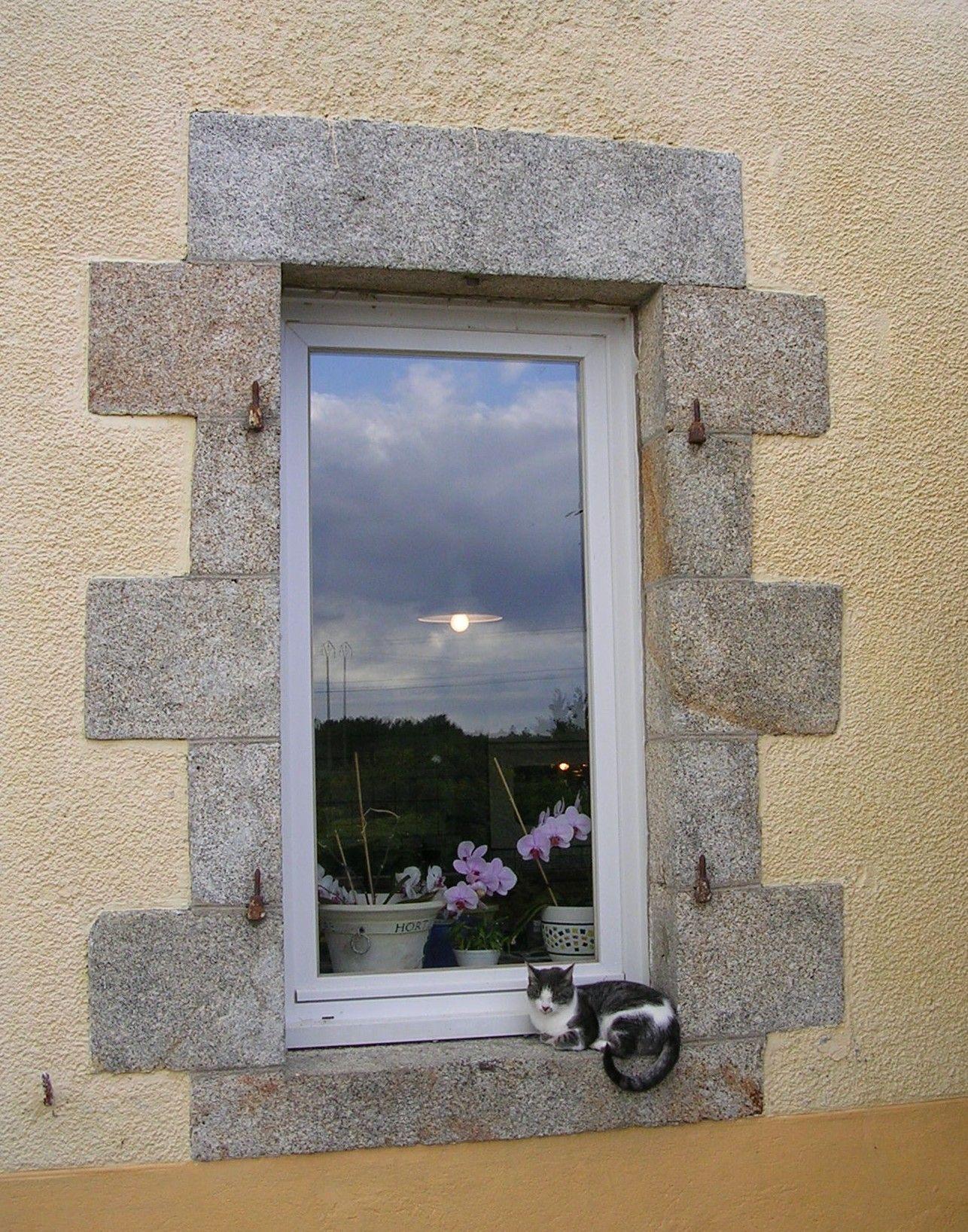 france - window cat