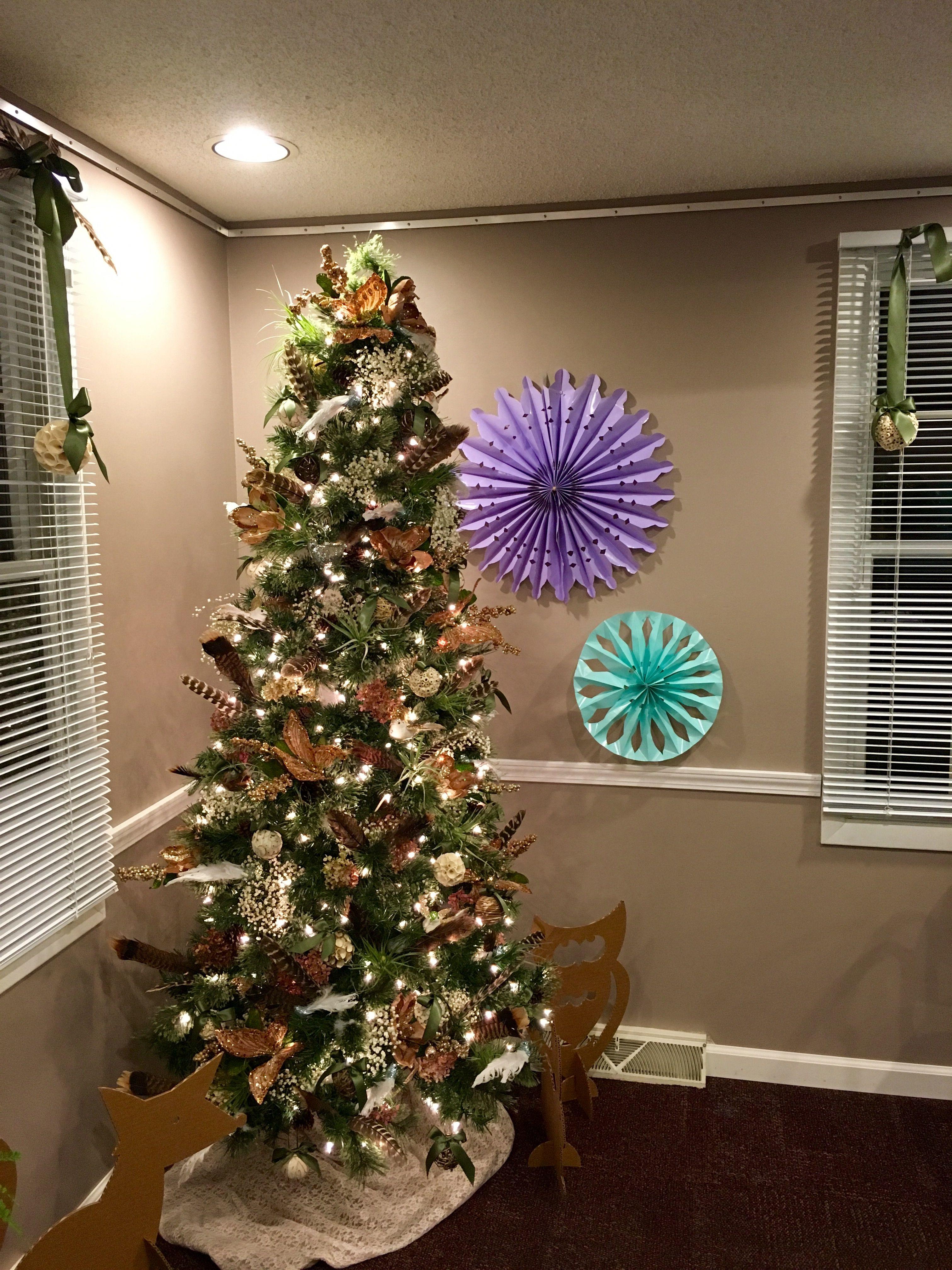 norfolk pine christmas tree - econhomes.com