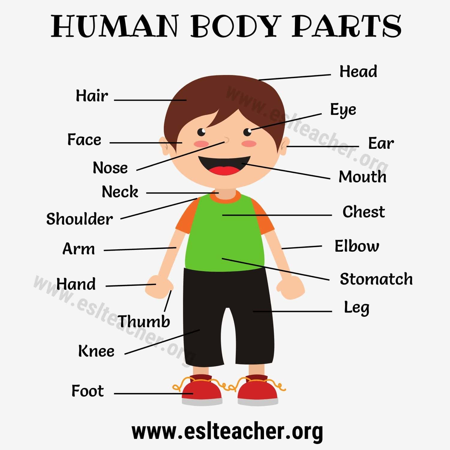 Body Parts Names 20 Proper Names For Human Body Parts
