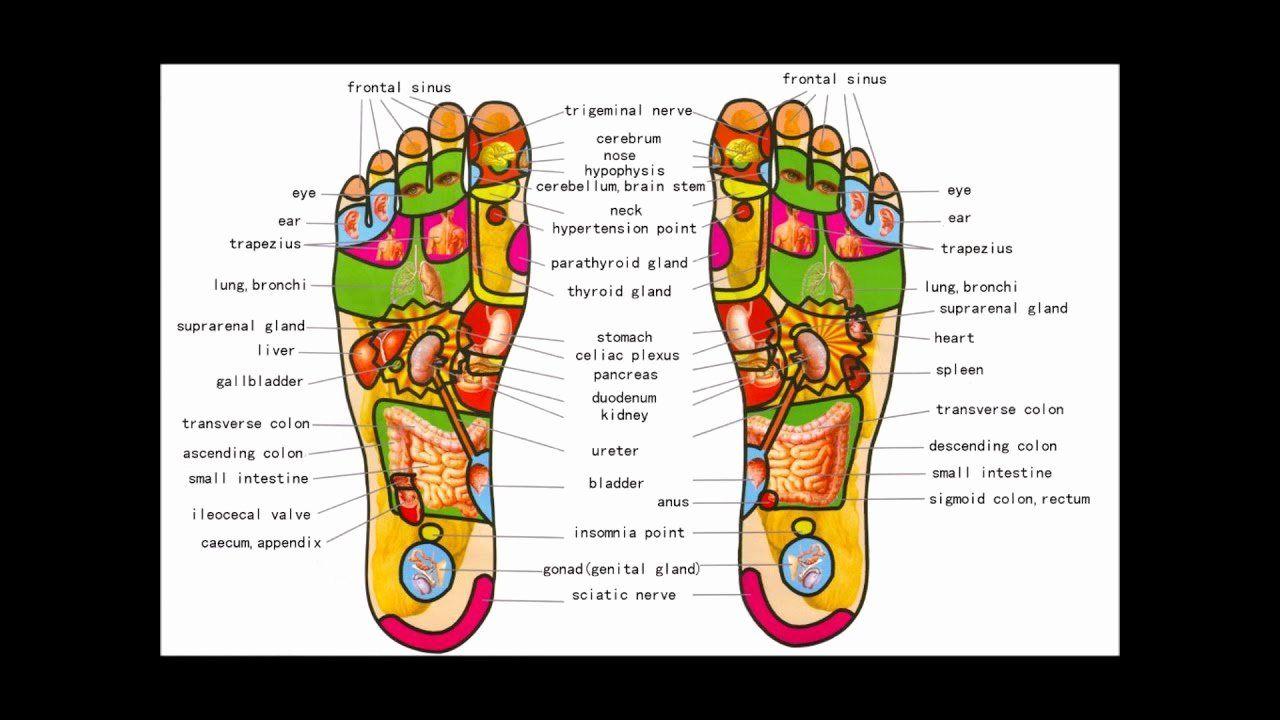 Free Reflexology Foot Chart New Foot Reflexology Map for ...