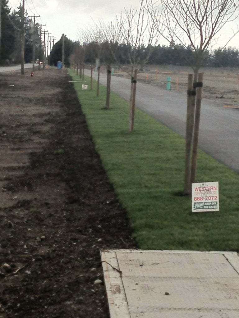 Quality Topsoil Sod Grass For Sale In Bc Sod Grass Grass For Sale Top Soil
