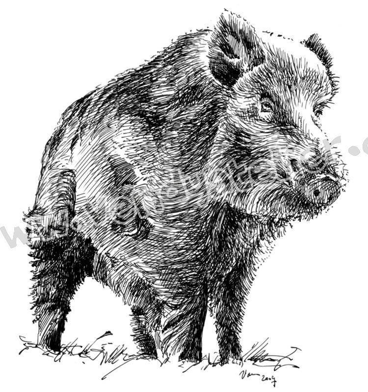 Divocak Kresba Hledat Googlem Wild Boar Drawing Painting Pig