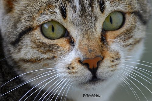 Cute Cat - http://www.1pic4u.com/blog/2014/09/06/cute-cat/