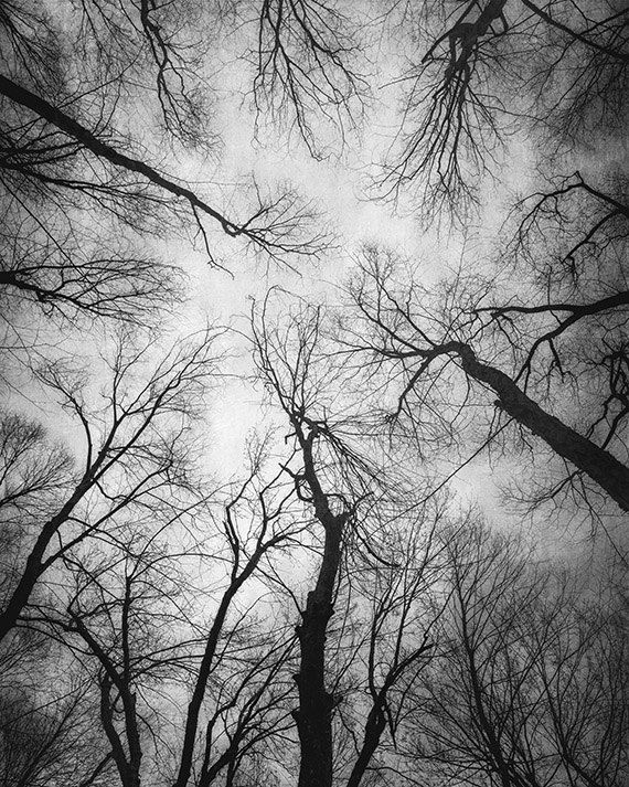 Landscape Photography Black And White Photograph Trees Woodland Forest Nature Gr Black And White Landscape Nature Photography Trees Landscape Photography