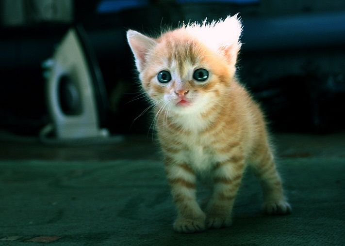 50 Beautiful And Cute Cat Pictures Kittens Cutest Cat Pics Kittens