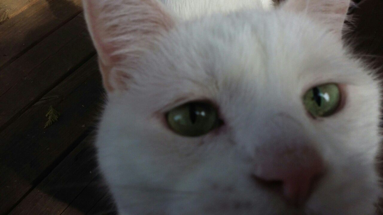 Calvin..how do to like my selfie?