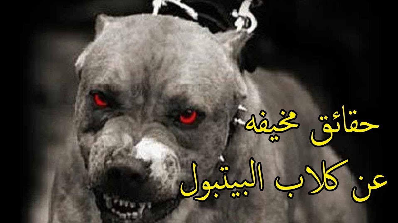 حقائق مخيفه عن كلاب البيتبول لكنها جميلة عن اقوى كلب في العالم Animals Dogs Art