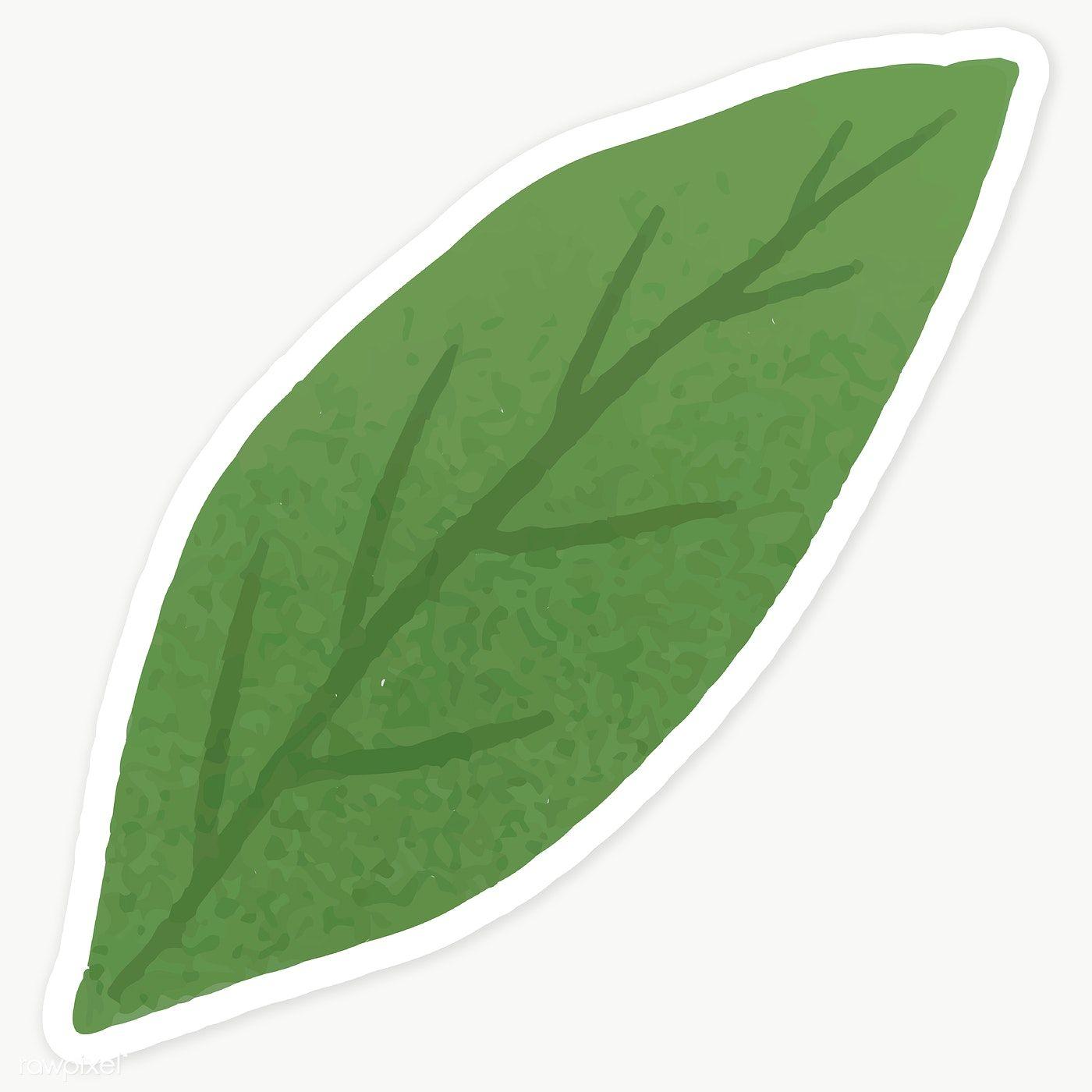 Green Leaf Sticker Transparent Png Premium Image By Rawpixel Com Katie Moir Leaves Illustration Flower Illustration Leaves