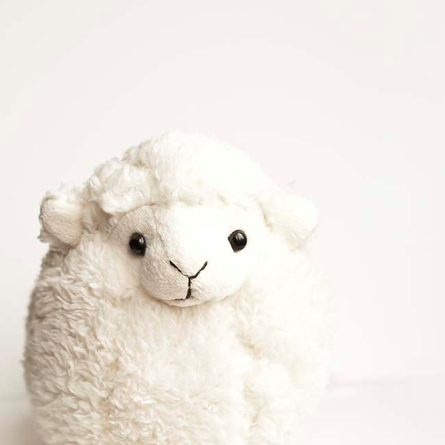 Small lamb.