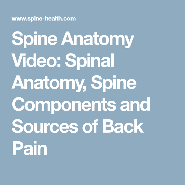 Spine Anatomy Video: Spinal Anatomy, Spine Components and Sources of ...