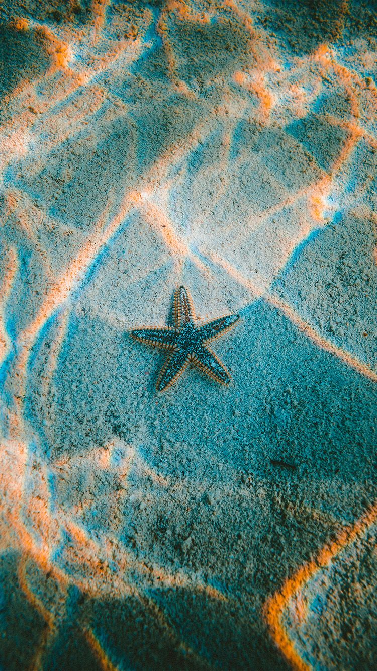 Nu23 Starfish Sea Beach Nature In 2020 Pretty Wallpapers Iphone Background Aesthetic Wallpapers