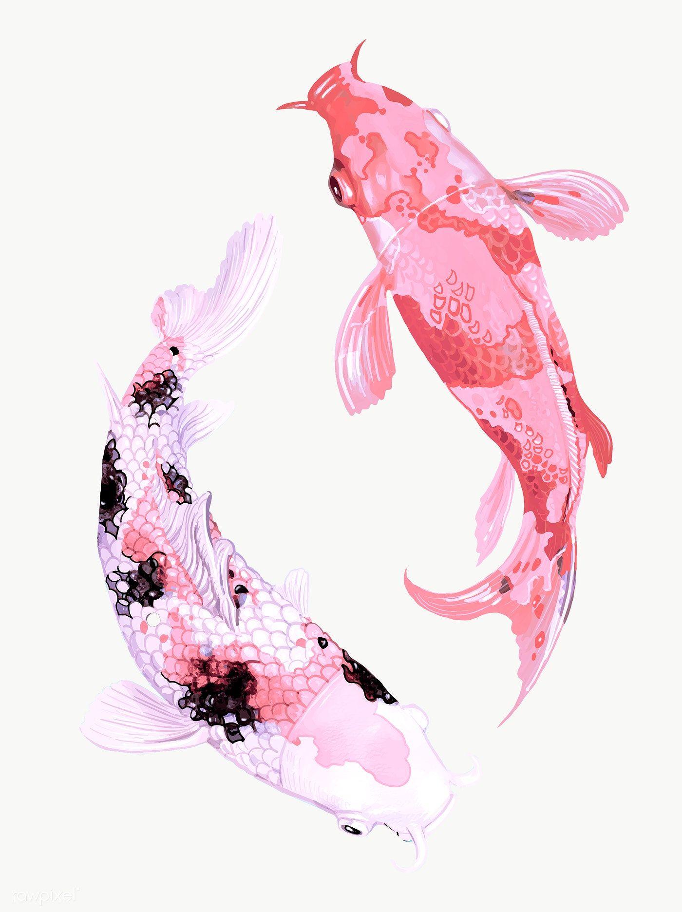Two Japanese Koi Fish Swimming Transparent Png Premium Image By Rawpixel Com Techi Koi Fish Drawing Japanese Koi Fish Tattoo Japanese Koi