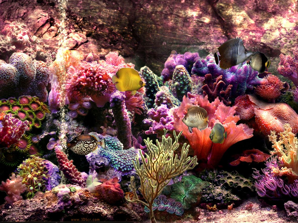 Beautiful Coral Reefs Scene beautiful colors