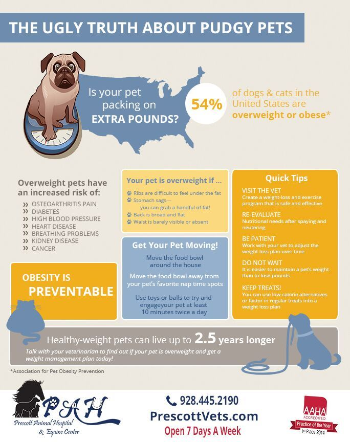 Pet Obesity Is A Serious Concern Visit Www Prescottvets Com To Learn More About How Pet Obesity Can Affe Fun Facts About Animals Obesity Facts Overweight Pet
