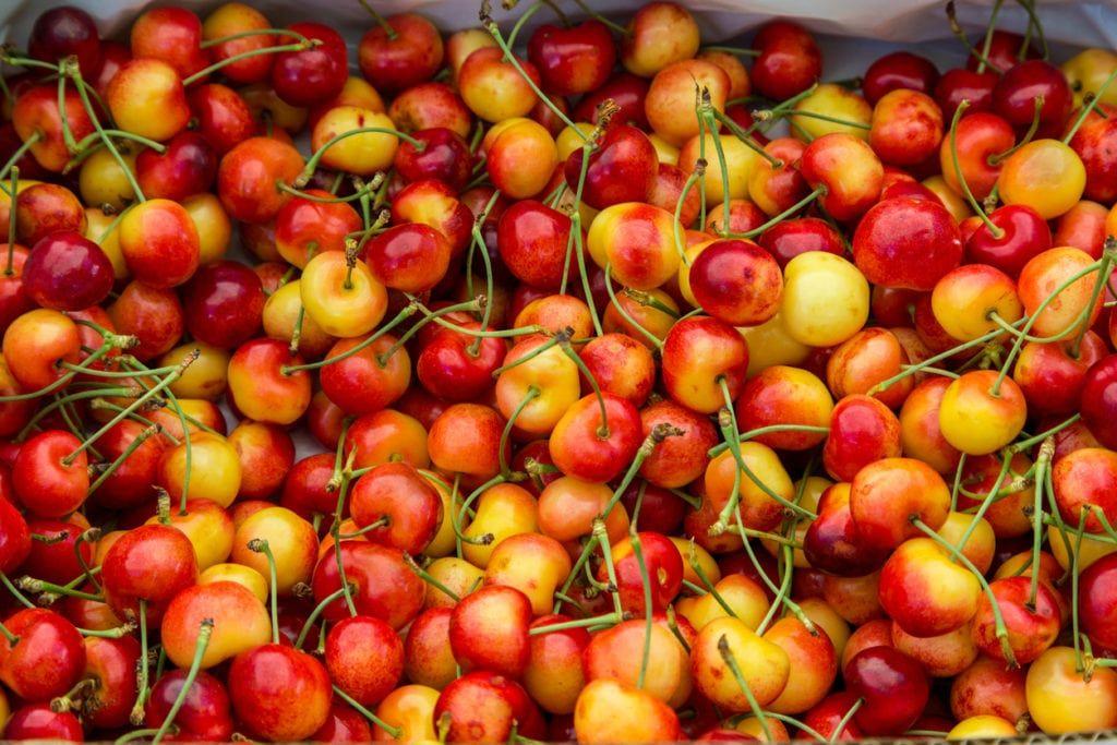 Growing Rainier Cherries Care Of Rainier Cherry Trees Cherry Tree Varieties Cherry Tree From Seed Cherry Seeds