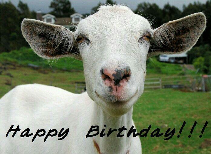 Happy birthday goat - photo#44