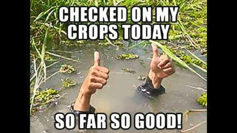Too Much Rain Social Work Humor Work Humor Social Work