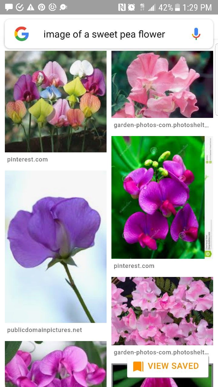 Birth Flowers April's Daisy and Sweet Pea Flower chart