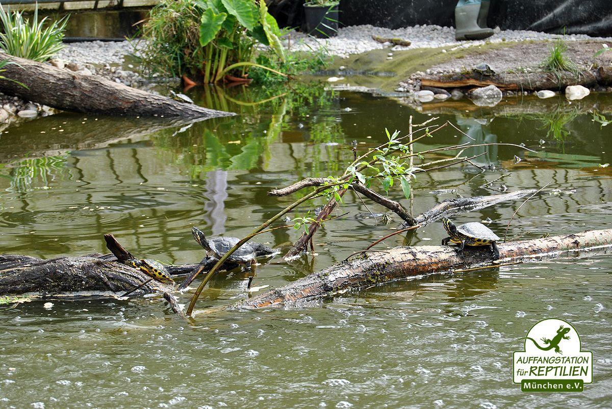 Minister Huber Eroffnet Deutschlands Grosstes Schildkrotenrefugium Schildkrotenhaus Tiere Reptilien