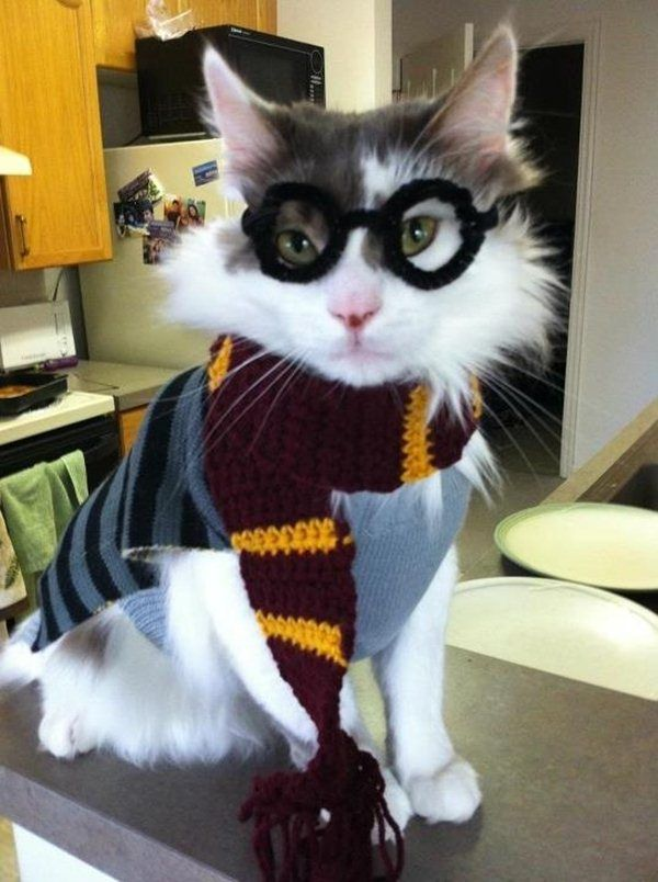Funny and creative pet costumes, cat costumes, dressed up