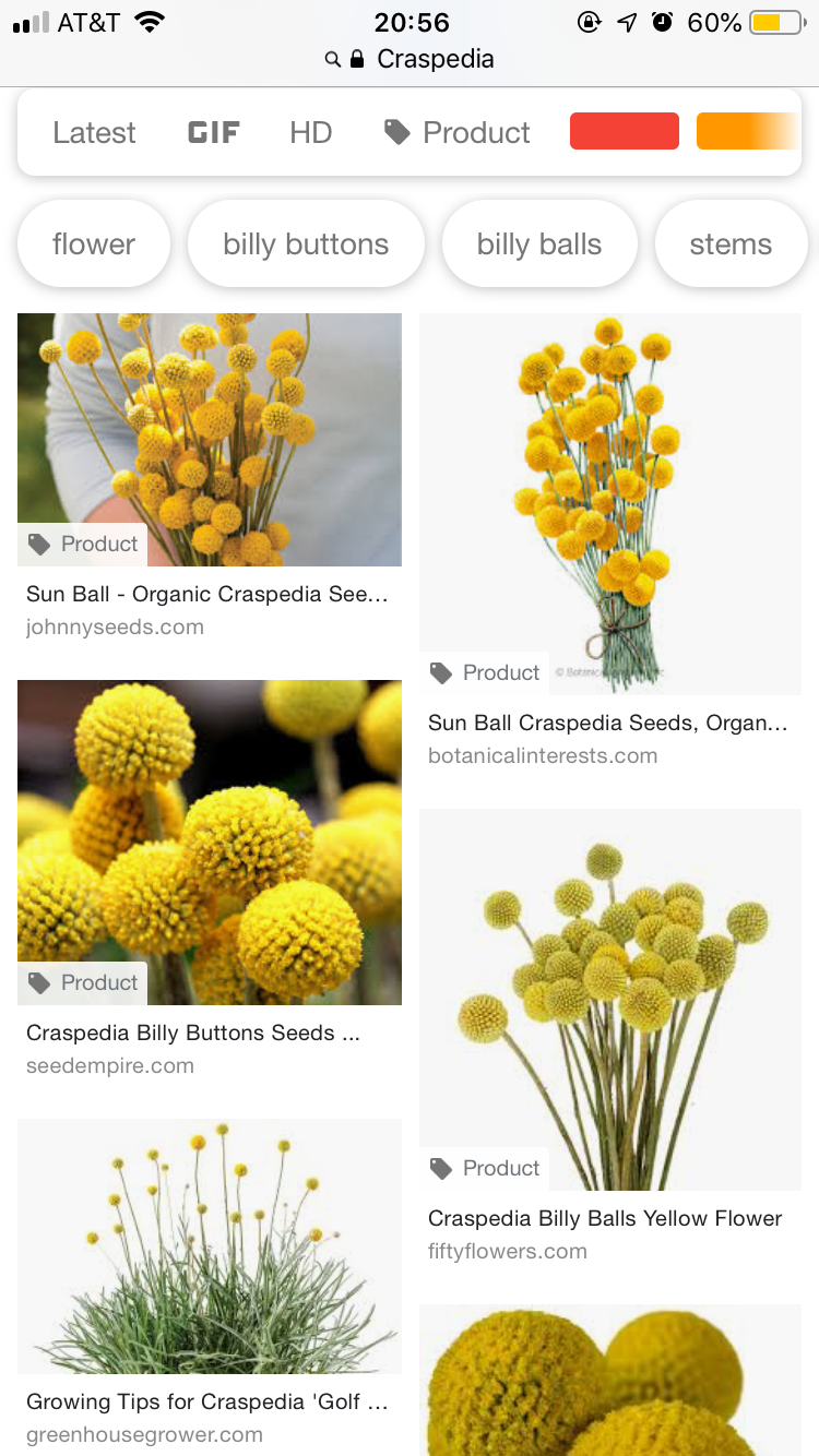 Pin By Lauren Frey On Tattoos Billy Buttons Yellow Flowers Flowers
