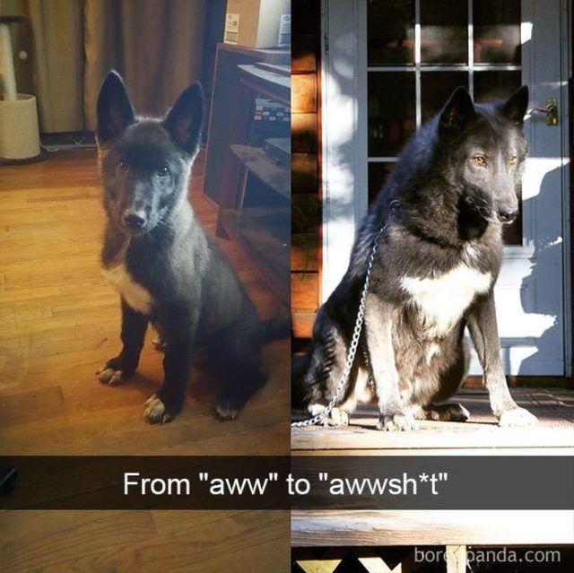 Photo of Funny Snapchats Dog Photo — 40 Pics – Funnyfoto