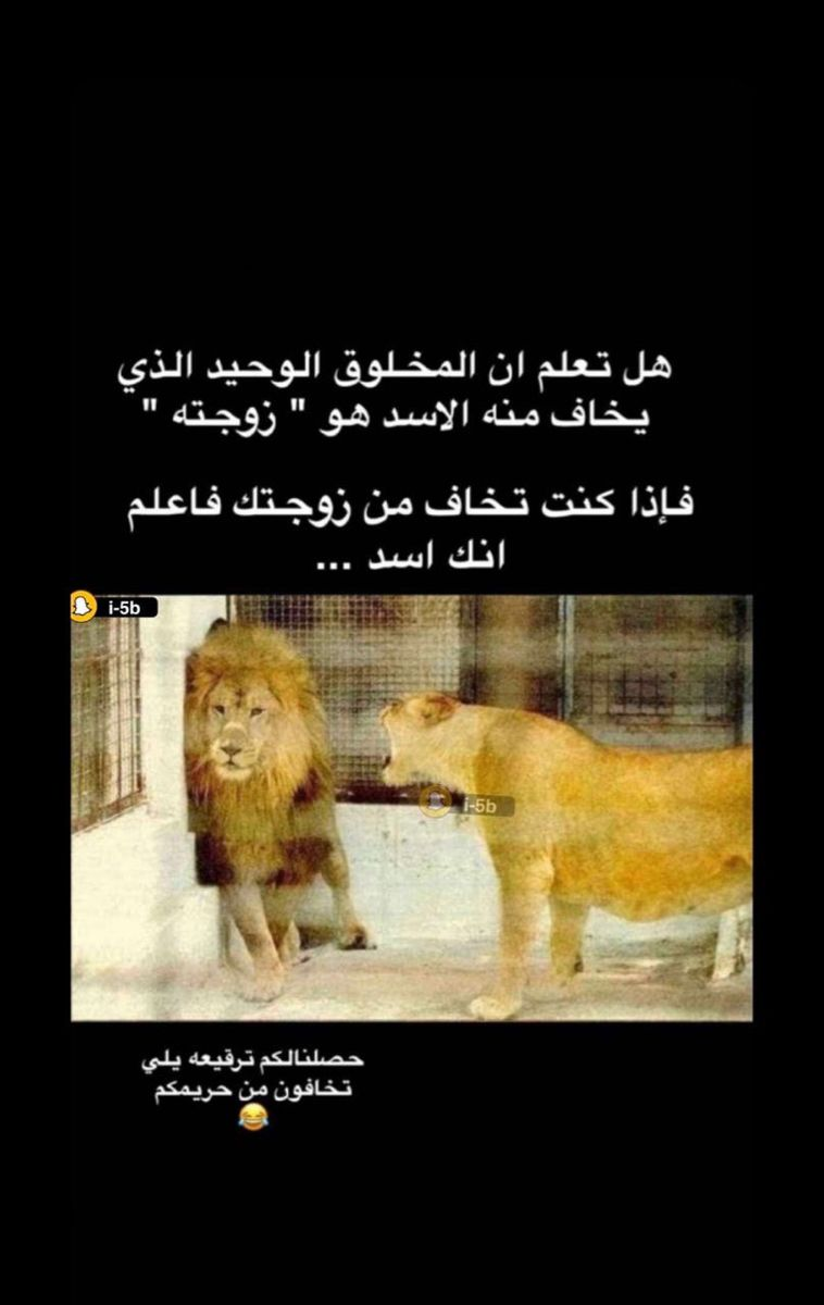 Pin By Ko Ko On Story Funny Jok Funny Arabic Quotes Arabic Funny