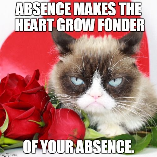 Image Tagged In Grumpy Cat Grumpy Cat Valentines Grumpy Cat Grumpy Cat Humor
