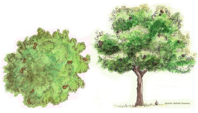 Desenhos De Arvores Paisagismo Pesquisa Google Paisagismo