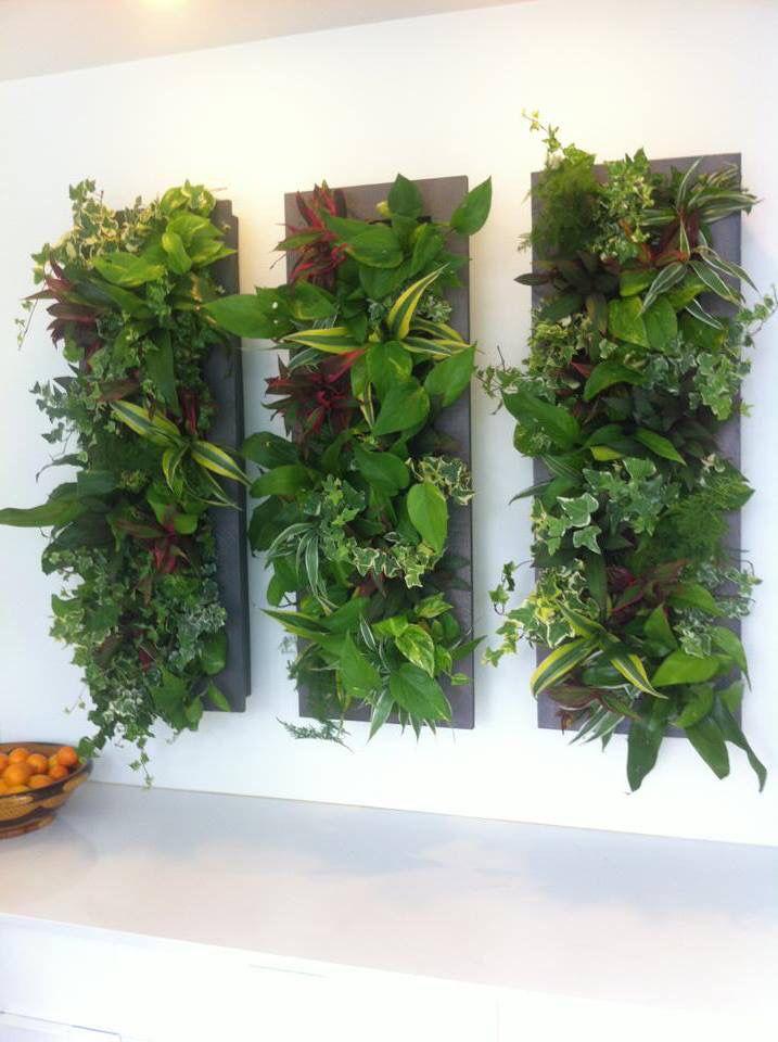 Green walls plants green walls pinterest green for Outdoor vertical wall garden