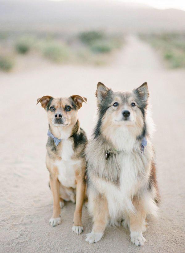#dog  Photography: Kurt Boomer Photo - kurtboomerphoto.com  Read More: http://www.stylemepretty.com/2011/06/23/diy-california-desert-wedding-by-kurt-boomer-photo/