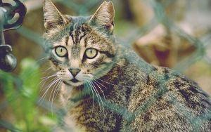 Preview wallpaper cat, mesh, striped, view
