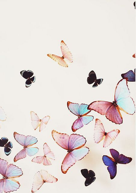 All The Pretty Butterflies Pretty Phone Wallpaper Tree